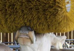 Weber Bürstensysteme Viehbürsten - Weber Wellness für den Stall